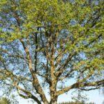 Photo arbre jardin